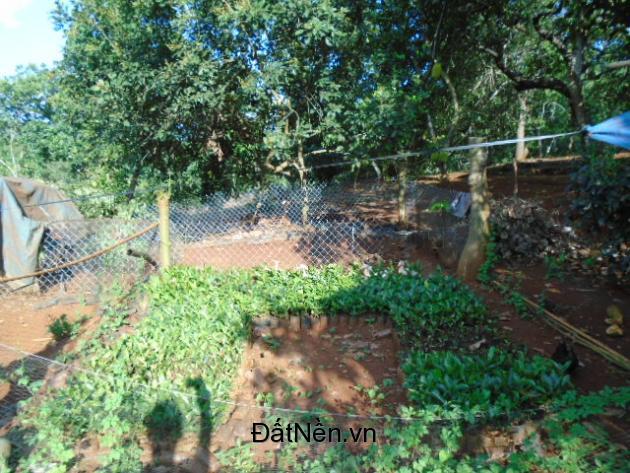 Bán 41144m2 Đất trồng điều, và cây ăn trái tại Long Khánh Đồng Nai