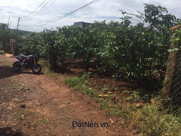 Bán 190m2 đất thổ cư chính chủ, 230triệu, Di Linh, Lâm Đồng