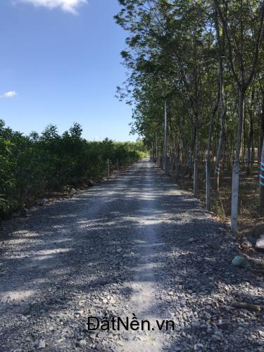 18 tỷ 1 mẫu đất sau UBND Tân Hiệp, Long Thành có thổ cư ngang 92m dài 105m.
