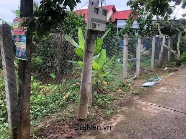 Cần bán vườn bưởi đang thu hoạch có diện tích 1.200m2 trong đó đã có 1 nền thổ cư 300m2