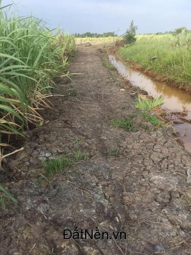 Bán gấp lô đất xây nhà vườn 1478m2 giá 1,9 tỷ xã Phước Khánh