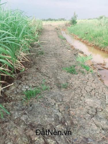 Bán đất nông nghiệp xã Phước Khánh 1478m2 giá rẻ