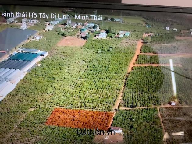 Đất ở đô thị Di Linh Lâm Đồng