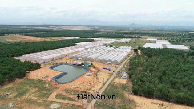 Cần bán đất nông nghiệp thích hợp đầu tư lâu dài nuôi trồng,50 nghìn/m2