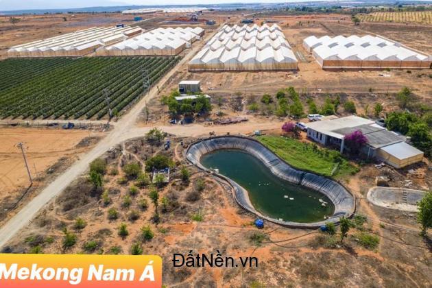 Đất nông nghiệp giá chỉ 50tr/1000m2 đã có sổ đỏ tại Bình Thuận