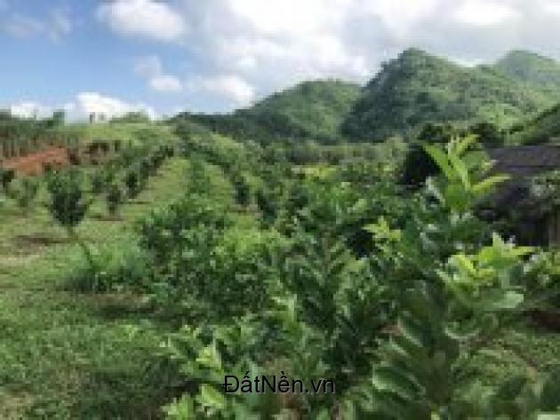 chuyển nhượng 100 ha đất làm trang trại tại tỉnh hòa bình