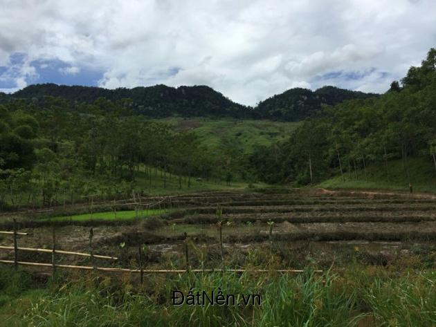 chuyển nhượng dự án 1500 ha đất trồng dược liệu tại huyện mai châu tỉnh hòa bình