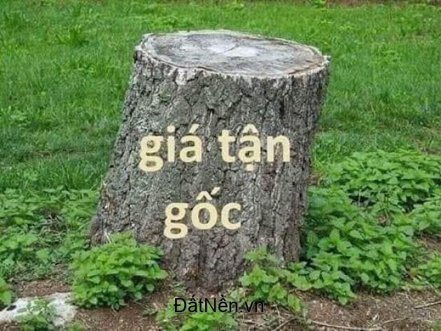 BĐS Cẩm Mỹ Đồng Nai