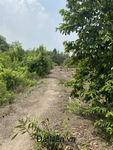 Bán gấp đất 1000 m2 Vĩnh Lôc B, Bình Chánh, Tphcm, đất đẹp vuông vắn, 1 tỷ.