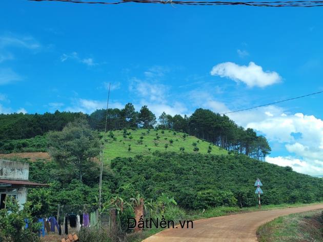 Bán đất hơn 500m2 tại Thị Trấn Đinh Văn - Lâm Hà - Lâm Đồng